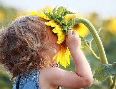 Snuivend-kind-aan-zonnebloek